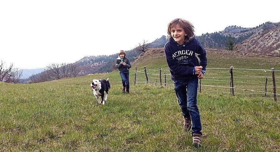 coraggio e lungimiranza nella educazione del cane