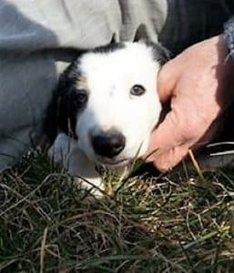 Pazienza e tolleranza nella educazione del cane