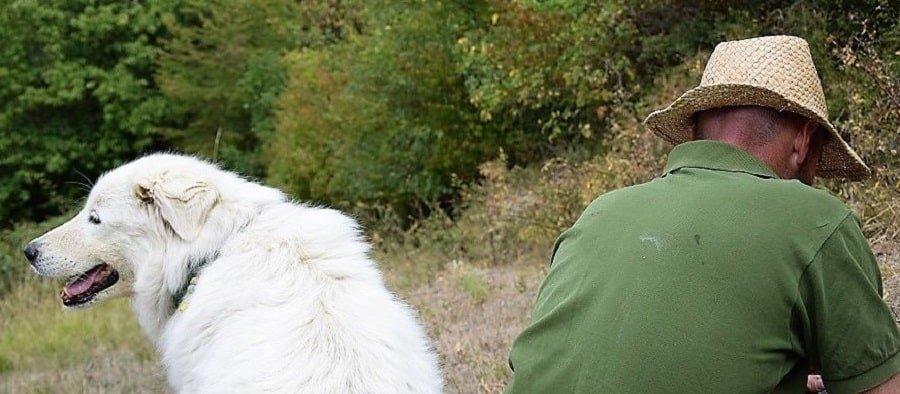 educazione del cane e sviluppo delle qualità