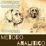 corsi di educazione del cane