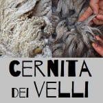 progetto lana cernita dei velli di lana di pecore felici a casavaikuntha