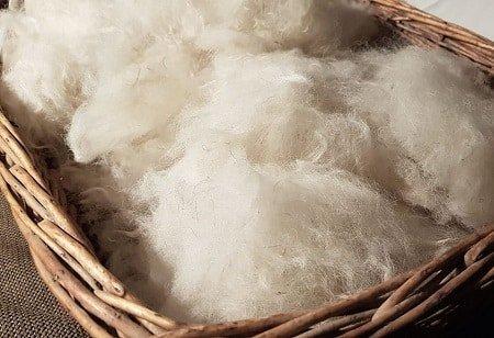 pre cardatura della lana