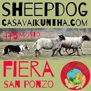 dimostrazione sheepdog alla fiera di san ponzo 2018