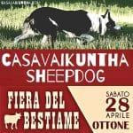 dimostrazione sheepdog alla fiera di san ponzo