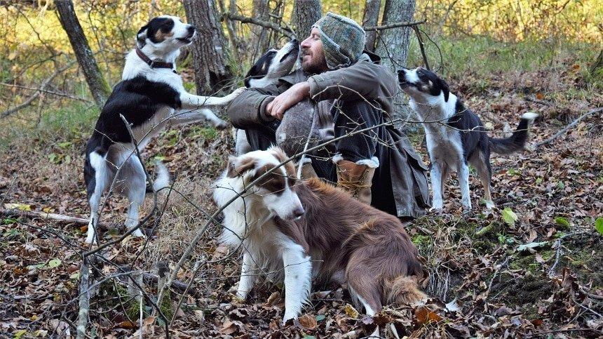educazione del cane: pratica vs realtà