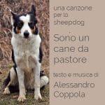 sono un cane da pastore canzone