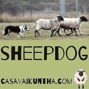 sheepdog a casa vaikuntha