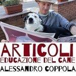 articoli sulla educazione del cane casavaikuntha tutorial di educazione del cane