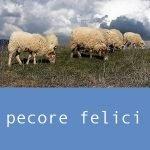 ahimsa amore di lana progetto lana dalla pecora al feltro pecore felici tosatura della lana cernita dei velli lavaggio della lana asciugatura della lana cardatura della lana realizzazione del feltro laboratorio lana laboratori di feltro per bambini
