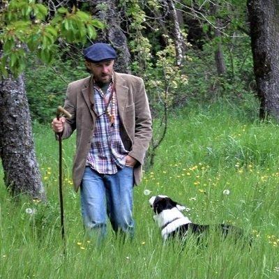 dimostrazione sheepdog alla fiera di ottone