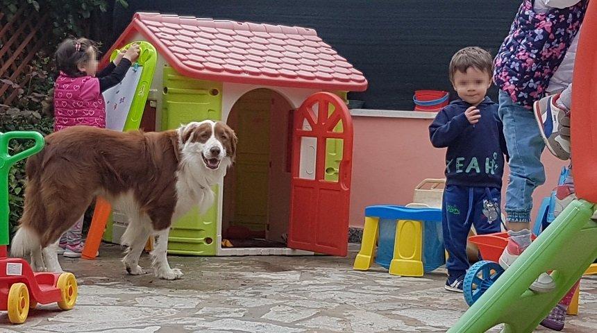 il cane e il condizionamento