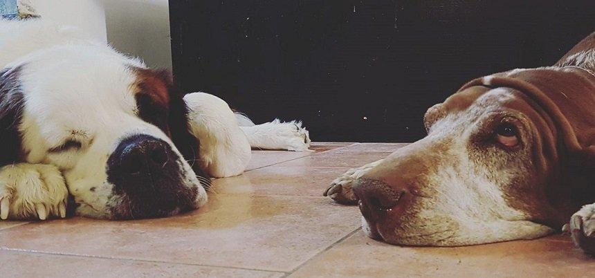 udito del cane