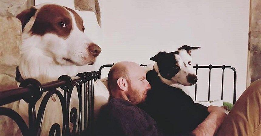 la coerenza nella educazione del cane