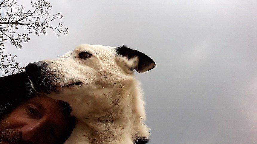 conoscere il cane non basta
