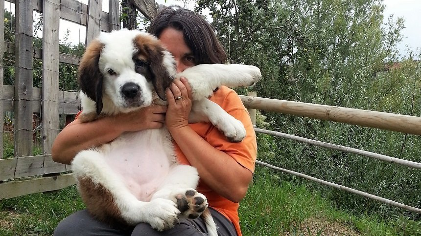 il cane e la fiducia