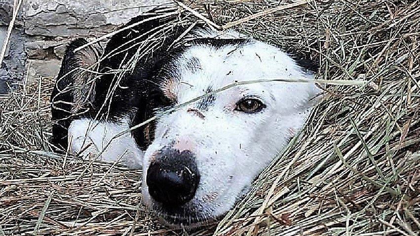 l'umore del cane