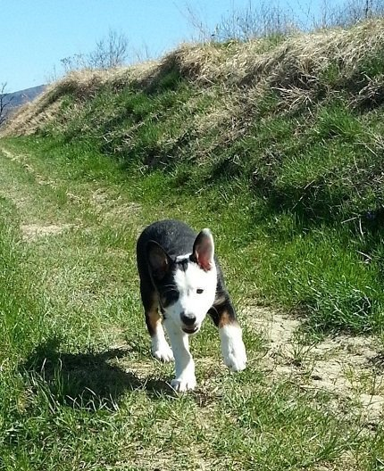 Con il cane alla scoperta del coraggio