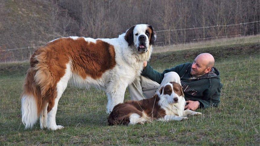 il cane sensibile