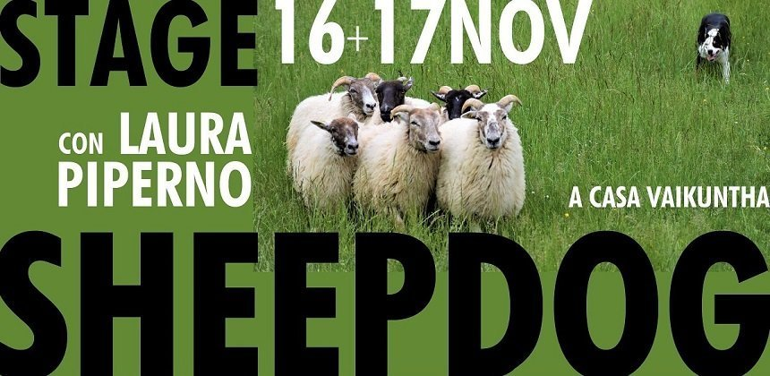 stage sheepdog con laura piperno a casa vaikuntha