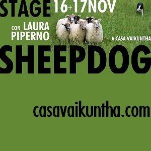 Stage sheepdog con Laura Piperno