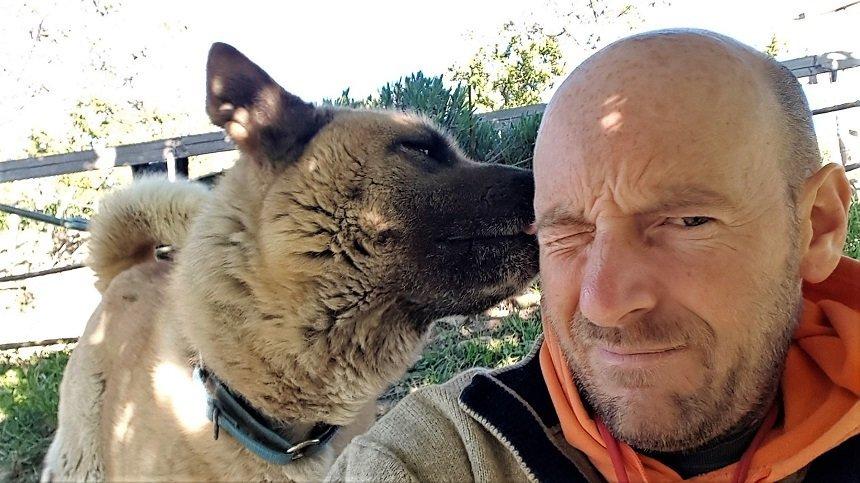 comportamenti aggressivi del cane