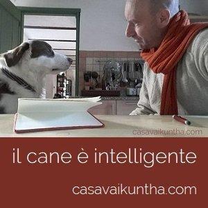Il cane è intelligente