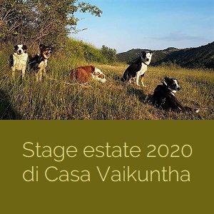 Stage In viaggio con il cane