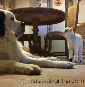 agnellino-e-cane-amici