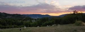 alba-con-pecore