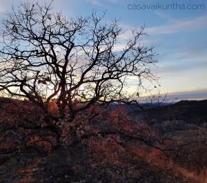 albero-casavaikuntha