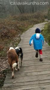 bambino-e-cani-che-corrono