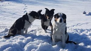 bordercollies-sulla-neve-a-casa-vaikuntha