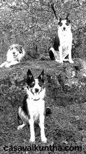 branco-di-cani