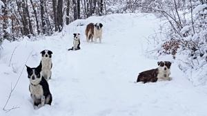 cani-di-casa-vaikuntha-sulla-neve1