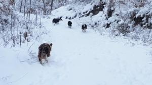 cani-di-casa-vaikuntha-sulla-neve2