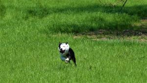 casavaikuntha-sheepdog-allenamenti5