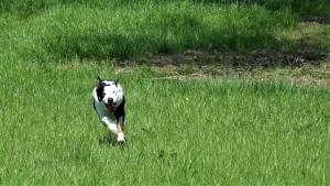 casavaikuntha-sheepdog-allenamenti9