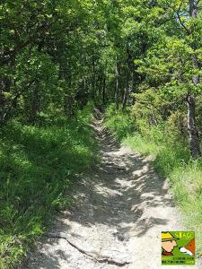 casavaikuntha-stage-cinofilo-dog-trekking-didattico1