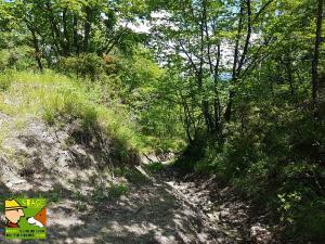casavaikuntha-stage-cinofilo-dog-trekking-didattico2