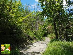 casavaikuntha-stage-cinofilo-dog-trekking-didattico3
