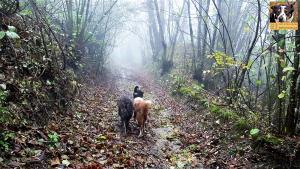 casavaikuntha-stage-con-il-mio-cane-senza-paura0