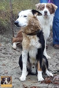 casavaikuntha-stage-con-il-mio-cane-senza-paura11