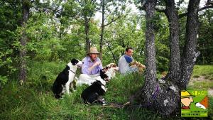 casavaikuntha-stage-educazione-cane