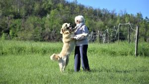 corsi-di-educazione-individuali-del-cane-casavaikuntha-goldenretriever1