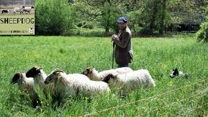 dimostrazione-sheepdog-casavaikuntha