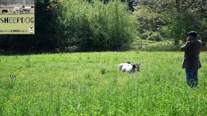 dimostrazione-sheepdog-casavaikuntha10
