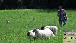 dimostrazione-sheepdog-casavaikuntha16