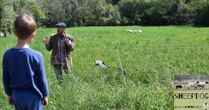 dimostrazione-sheepdog-casavaikuntha17