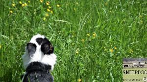 dimostrazione-sheepdog-casavaikuntha18