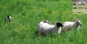 dimostrazione-sheepdog-casavaikuntha20
